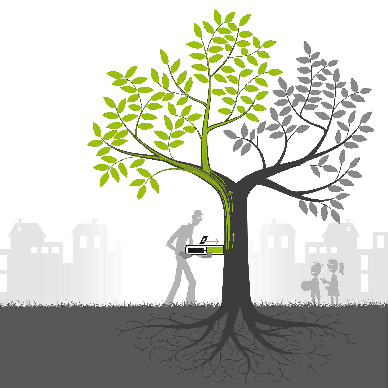 Avantages du traitement des arbres par micro-injection sécurisée
